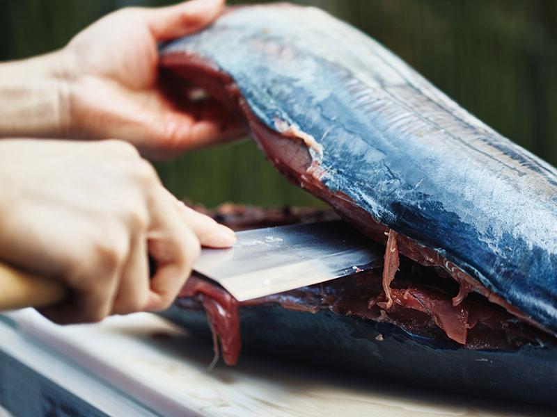 戻り鰹を出刃包丁、刺身包丁でさばきました